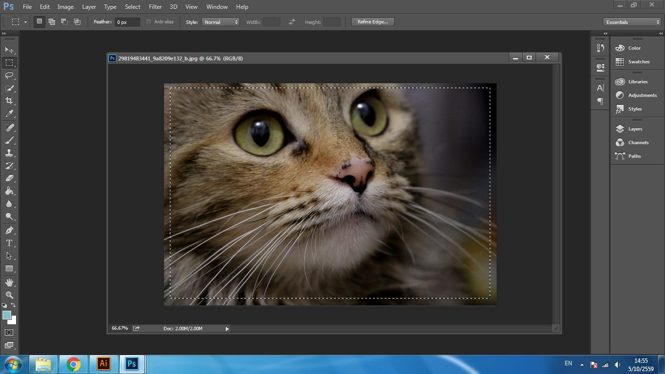 เรียน Photoshop,เรียน Illustrator,เรียน Graphic Design,Graphic Design,Illustrator,Photoshop,เทคนิค Photoshop,Graphic Design Tips,ภาพขอบมน,ทำภาพขอบมน Photoshop